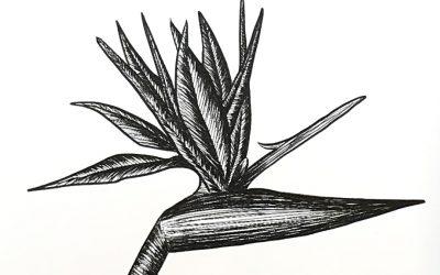 Louise Hastings @ Green Cactus